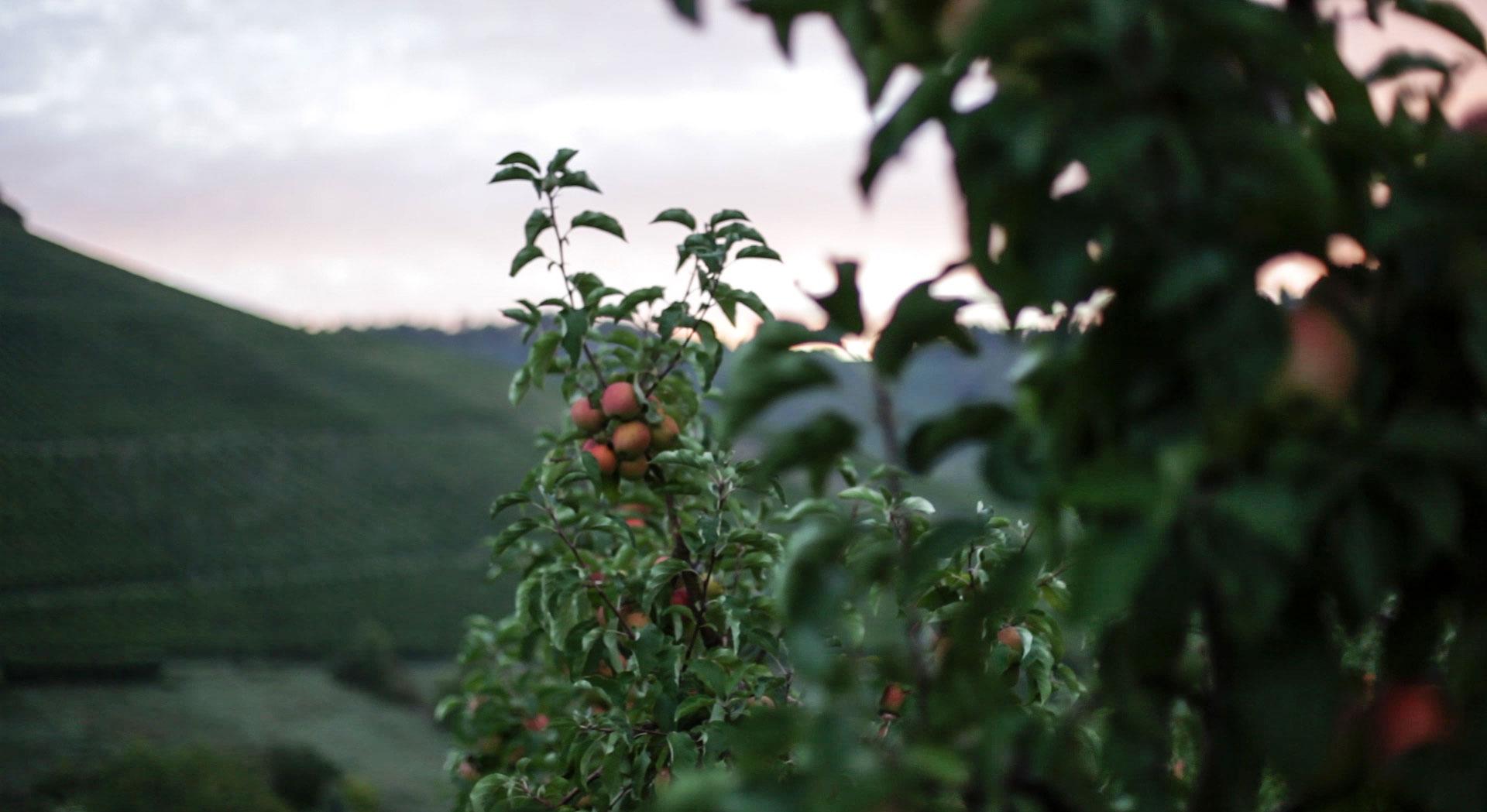 Videodreh zum Unternehmensfilm Nanz Obstbau Uhlbach